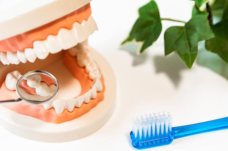 歯周病は予防が大事